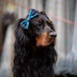 Koer tartani peapaelaga pilt